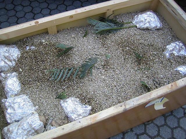 Encephalartos Lieferung aus Südafrika